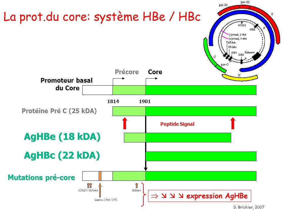 La prot.du core: système HBe / HBc