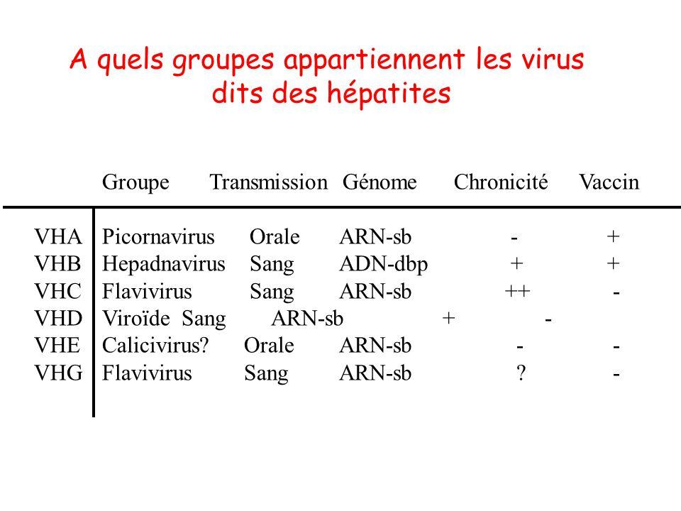 A quels groupes appartiennent les virus