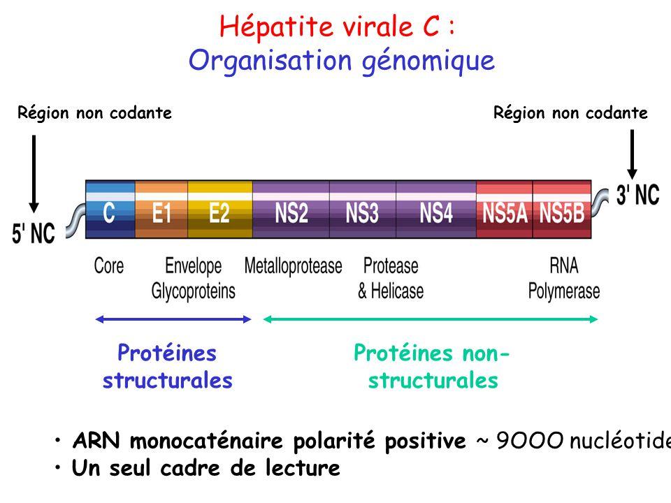 Protéines structurales Protéines non-structurales