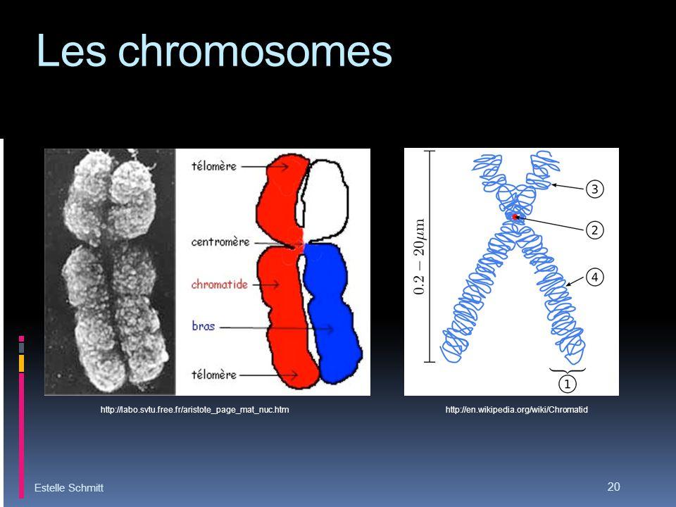 Les chromosomes Estelle Schmitt