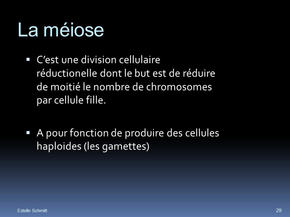 La méiose C'est une division cellulaire réductionelle dont le but est de réduire de moitié le nombre de chromosomes par cellule fille.