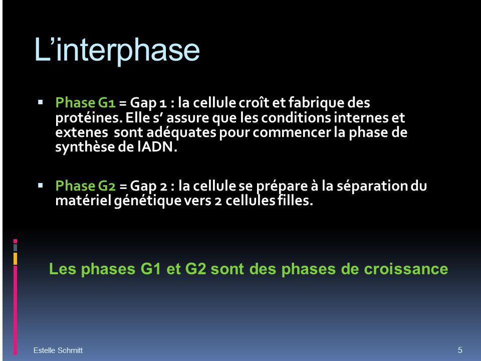 L'interphase Les phases G1 et G2 sont des phases de croissance
