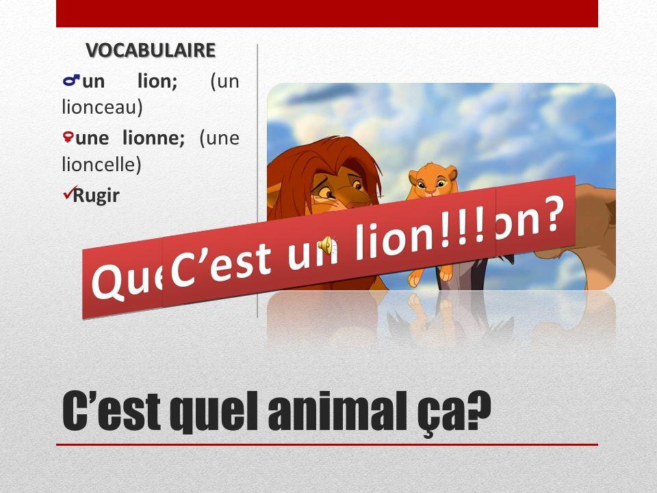 Quel bruit fait le lion C'est un lion!!! Le lion rugit!
