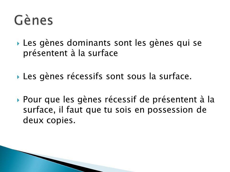 Gènes Les gènes dominants sont les gènes qui se présentent à la surface. Les gènes récessifs sont sous la surface.