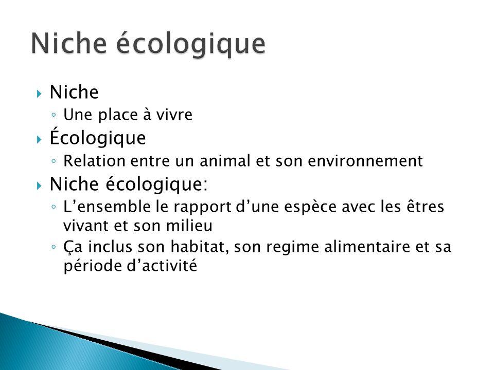 Niche écologique Niche Écologique Niche écologique: Une place à vivre