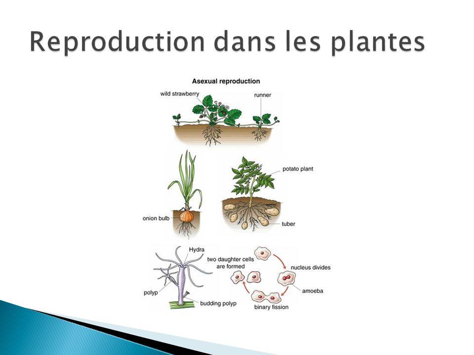 Reproduction dans les plantes