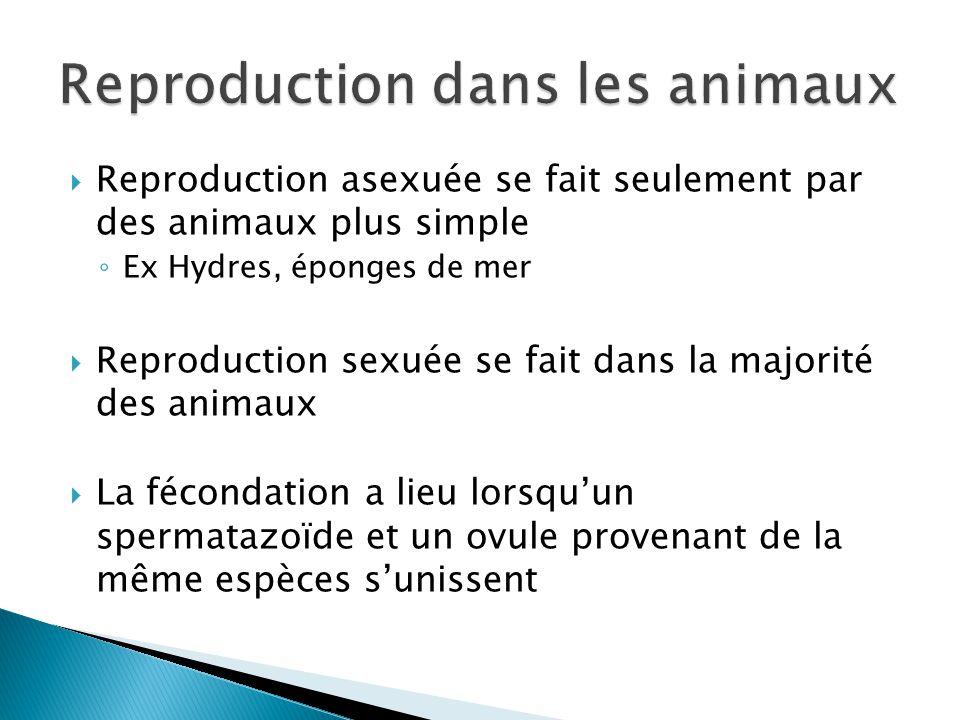 Reproduction dans les animaux