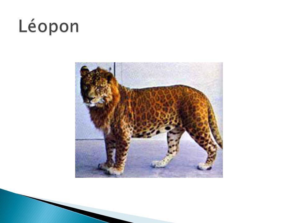 Léopon