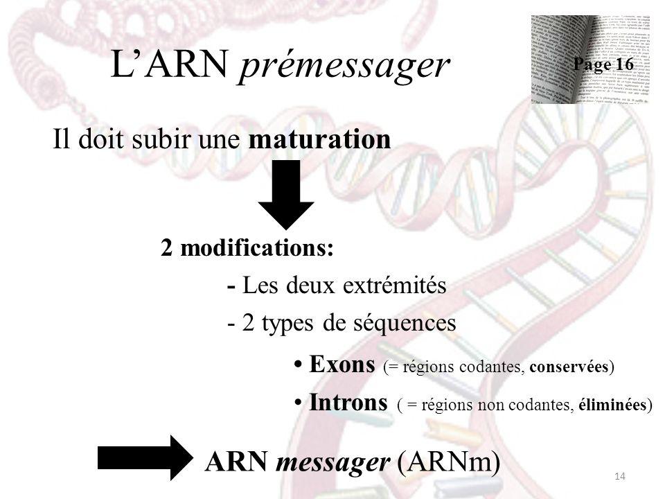 L'ARN prémessager ARN messager (ARNm) Il doit subir une maturation
