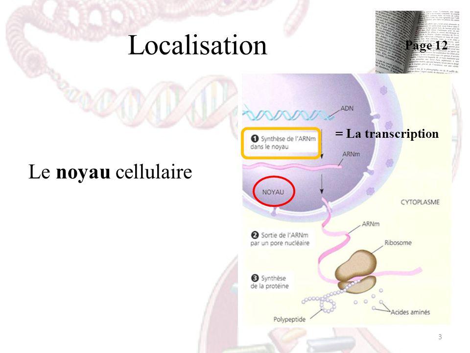 Localisation Page 12 = La transcription Le noyau cellulaire