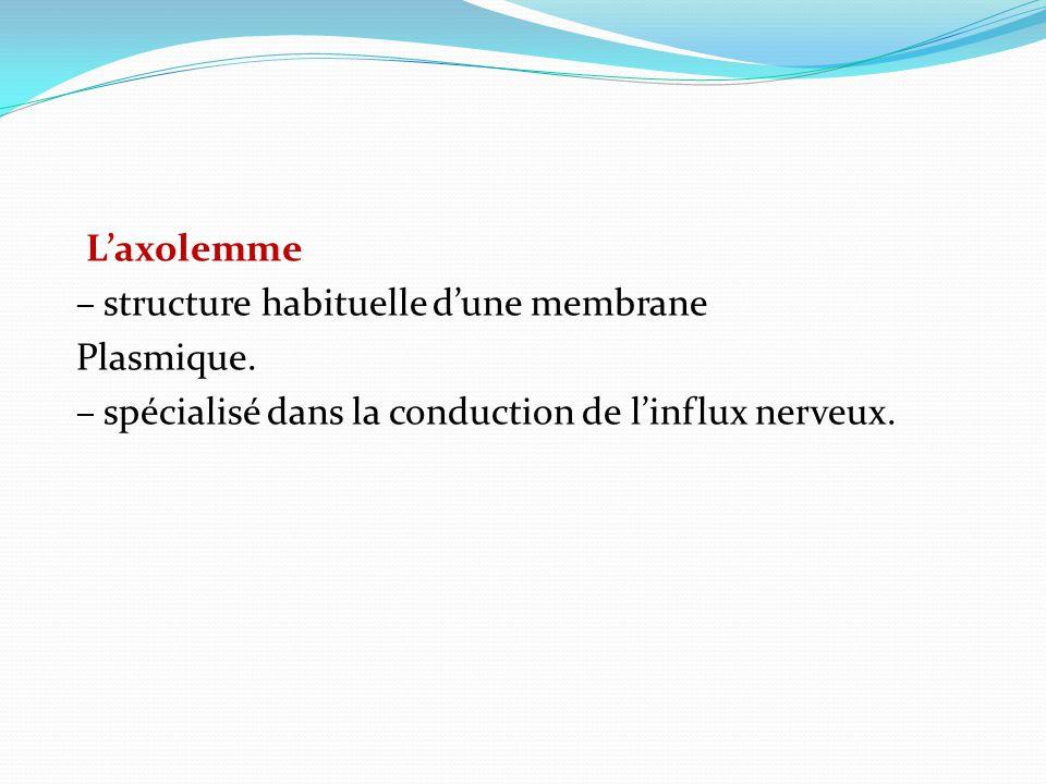 L'axolemme – structure habituelle d'une membrane. Plasmique.