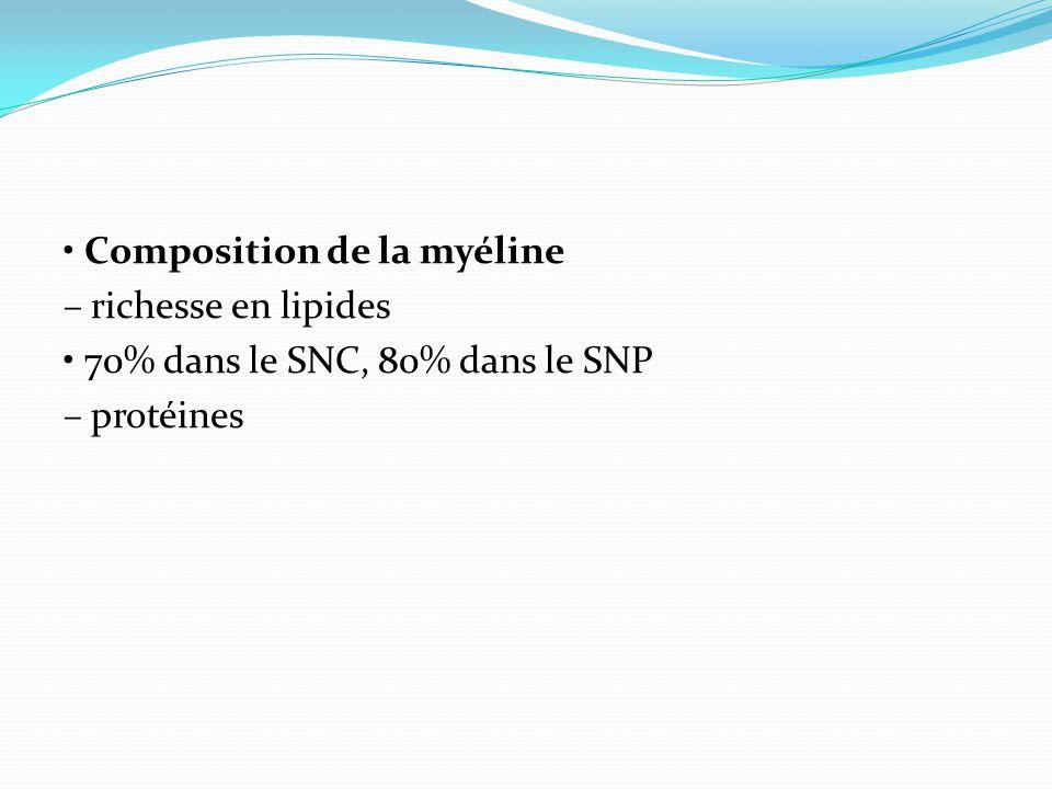 • Composition de la myéline – richesse en lipides • 70% dans le SNC, 80% dans le SNP – protéines