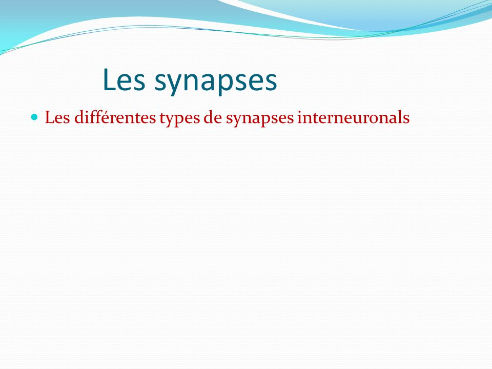 Les synapses Les différentes types de synapses interneuronals