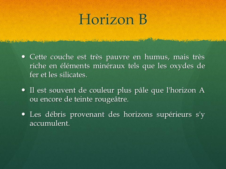 Horizon B Cette couche est très pauvre en humus, mais très riche en éléments minéraux tels que les oxydes de fer et les silicates.