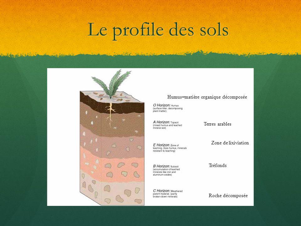 Le profile des sols Humus=matière organique décomposée Terres arables