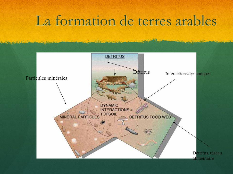 La formation de terres arables