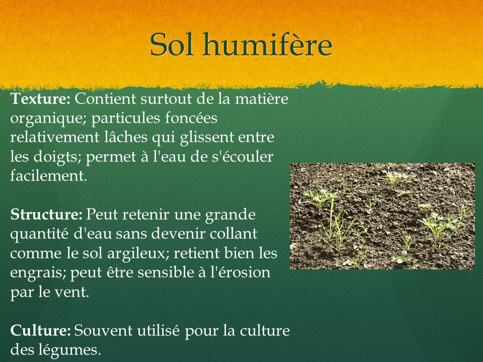 Sol humifère