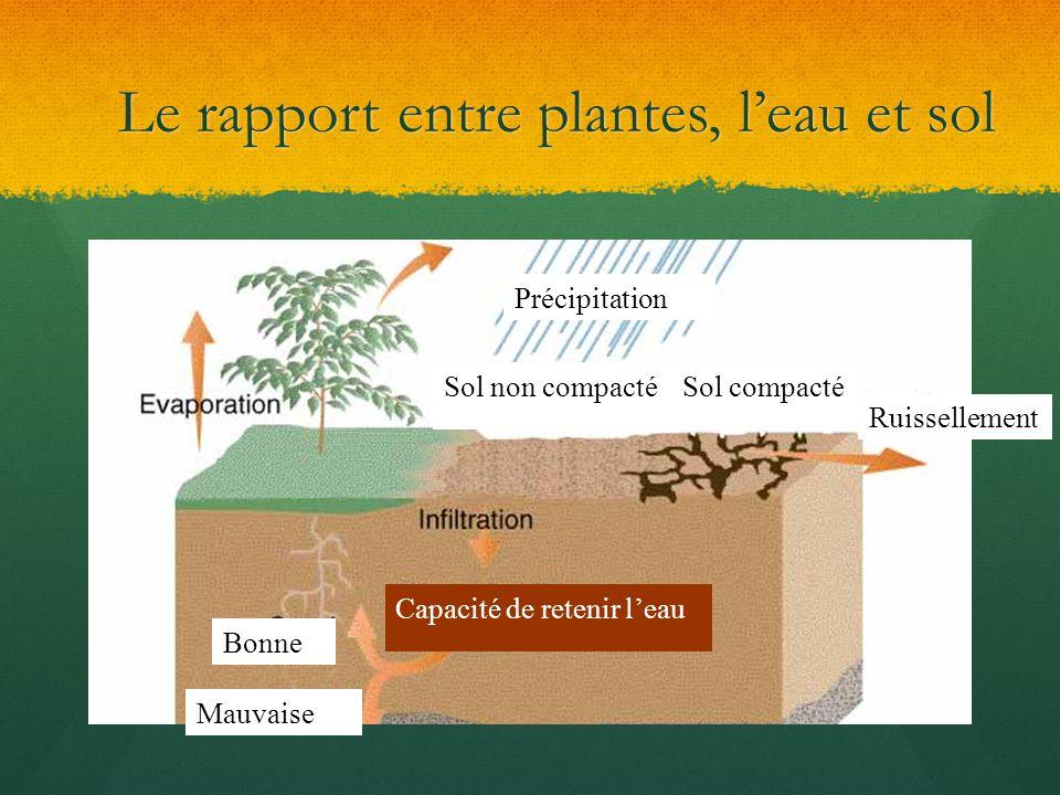 Le rapport entre plantes, l'eau et sol