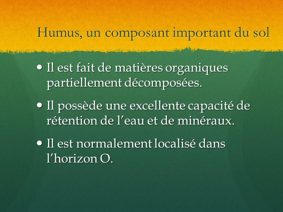 Humus, un composant important du sol
