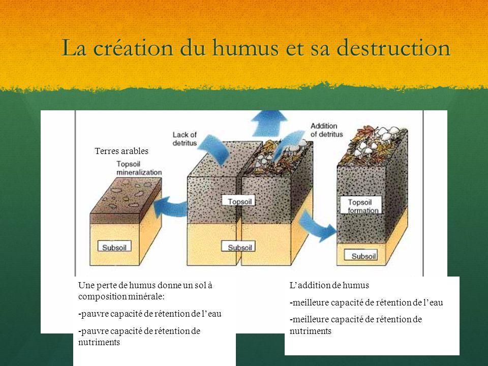 La création du humus et sa destruction