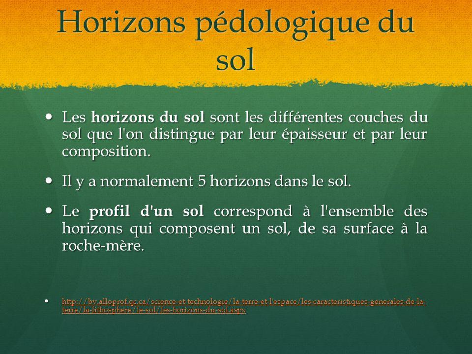 Horizons pédologique du sol