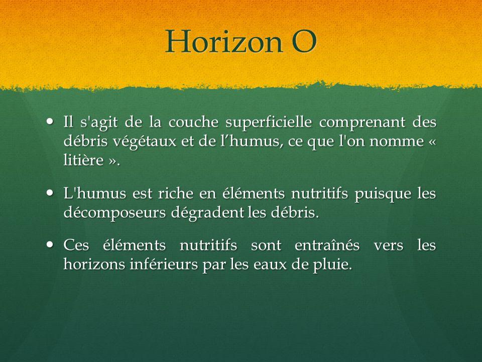 Horizon O Il s agit de la couche superficielle comprenant des débris végétaux et de l'humus, ce que l on nomme « litière ».