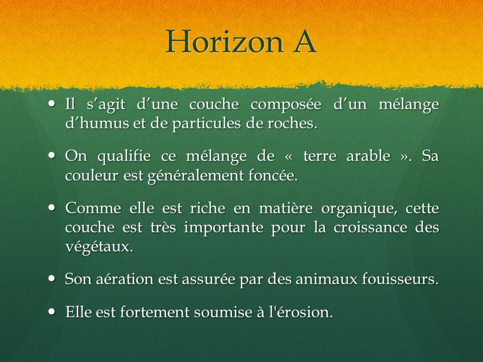 Horizon A Il s'agit d'une couche composée d'un mélange d'humus et de particules de roches.