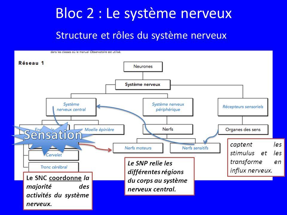 Bloc 2 : Le système nerveux
