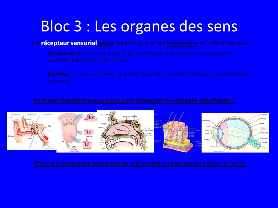 Bloc 3 : Les organes des sens