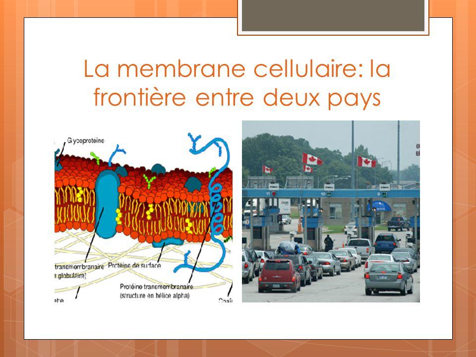 La membrane cellulaire: la frontière entre deux pays