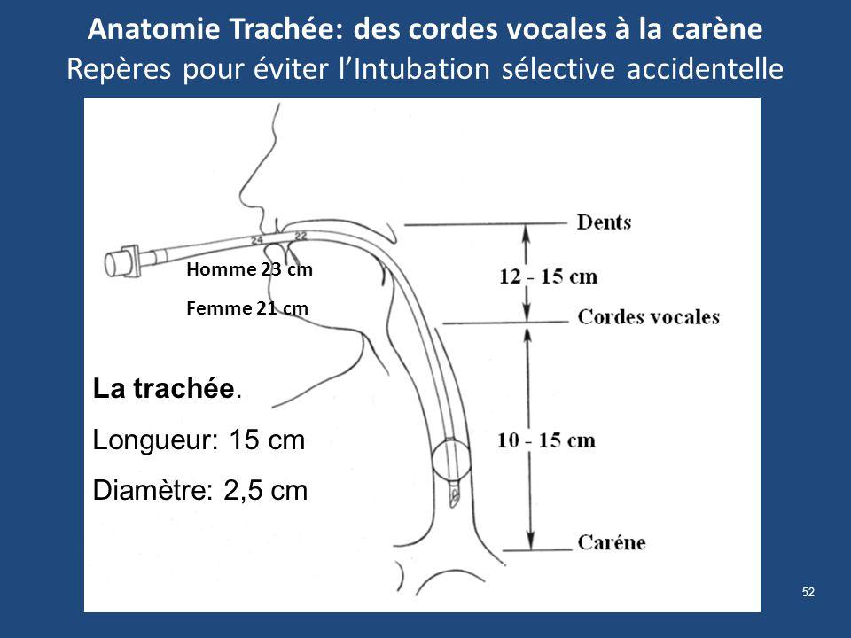 Anatomie Trachée: des cordes vocales à la carène Repères pour éviter l'Intubation sélective accidentelle