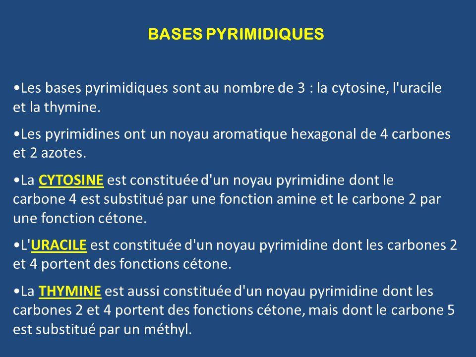BASES PYRIMIDIQUES Les bases pyrimidiques sont au nombre de 3 : la cytosine, l uracile et la thymine.
