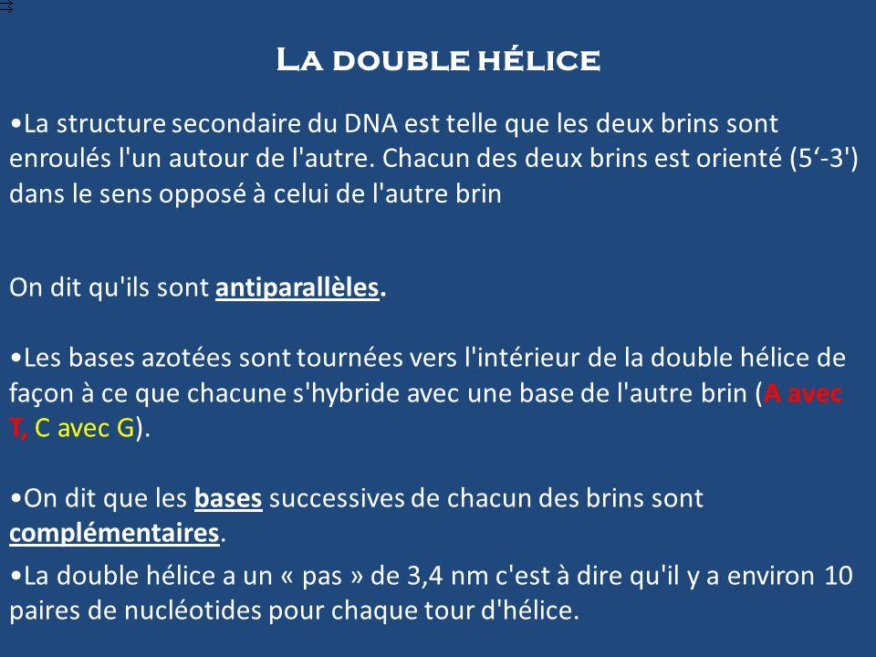 La double hélice