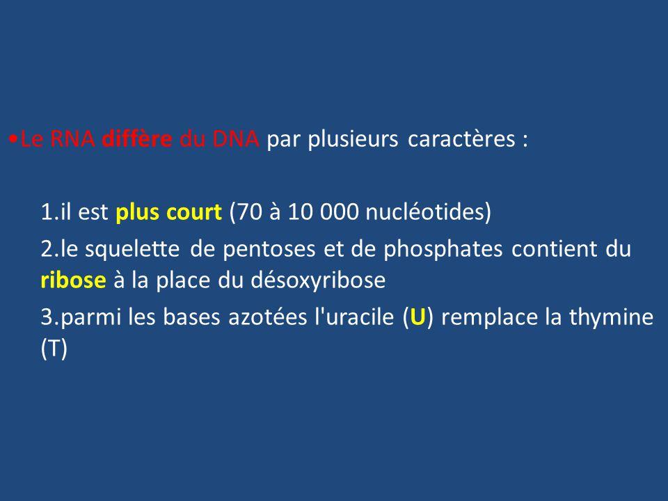 Le RNA diffère du DNA par plusieurs caractères :