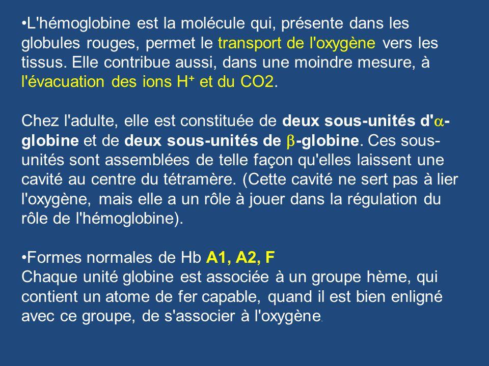 L hémoglobine est la molécule qui, présente dans les globules rouges, permet le transport de l oxygène vers les tissus. Elle contribue aussi, dans une moindre mesure, à l évacuation des ions H+ et du CO2. Chez l adulte, elle est constituée de deux sous-unités d a-globine et de deux sous-unités de b-globine. Ces sous-unités sont assemblées de telle façon qu elles laissent une cavité au centre du tétramère. (Cette cavité ne sert pas à lier l oxygène, mais elle a un rôle à jouer dans la régulation du rôle de l hémoglobine).