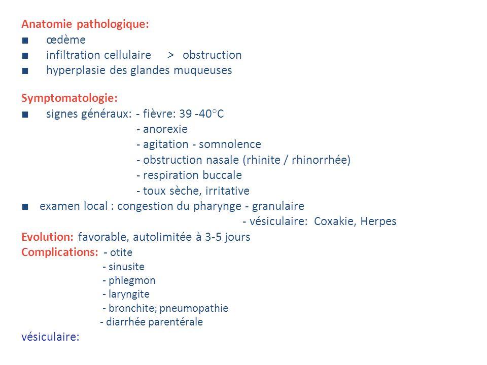 Anatomie pathologique: ■ œdème
