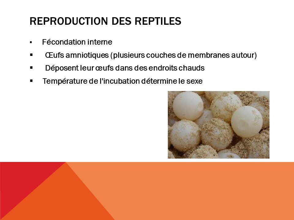 Reproduction des reptiles