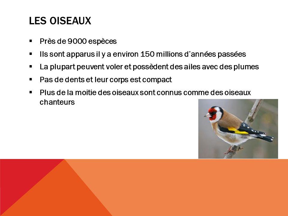 Les oiseaux Près de 9000 espèces