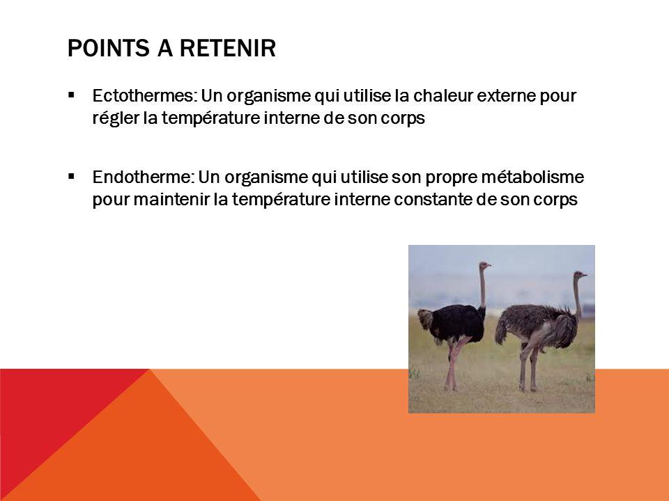 Points a retenir Ectothermes: Un organisme qui utilise la chaleur externe pour régler la température interne de son corps.