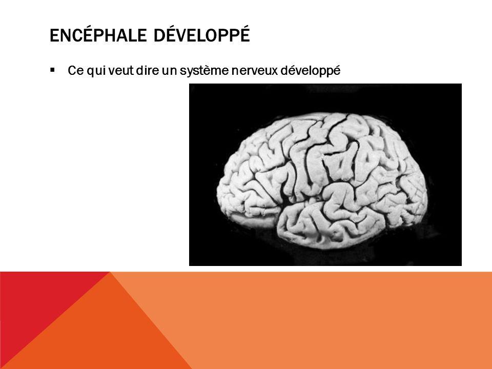encéphale développé Ce qui veut dire un système nerveux développé