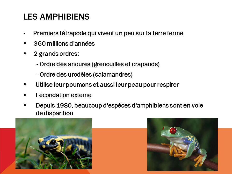 Les amphibiens 360 millions d années 2 grands ordres: