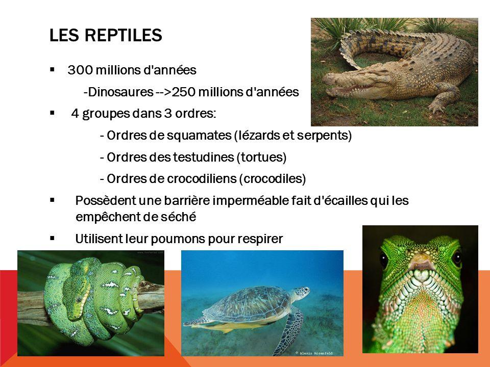 Les reptiles 300 millions d années