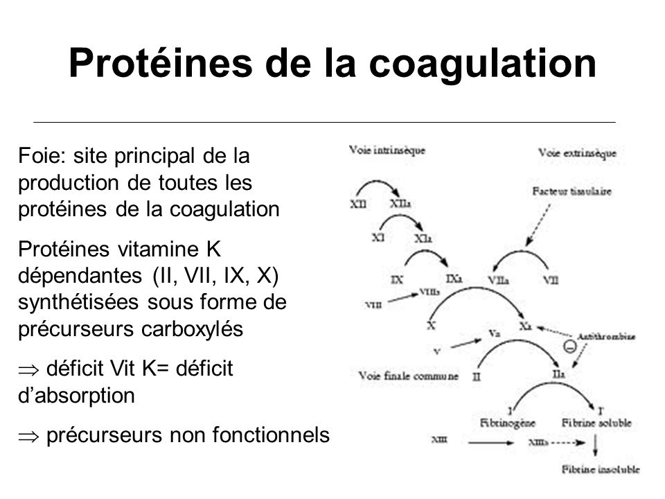 Protéines de la coagulation