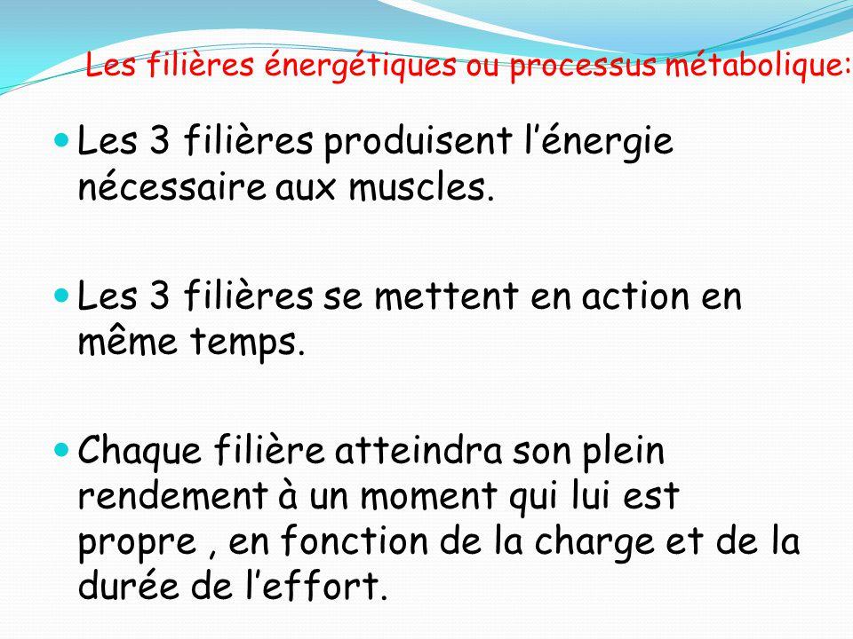Les filières énergétiques ou processus métabolique: