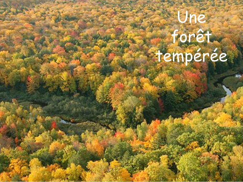 Une forêt tempérée