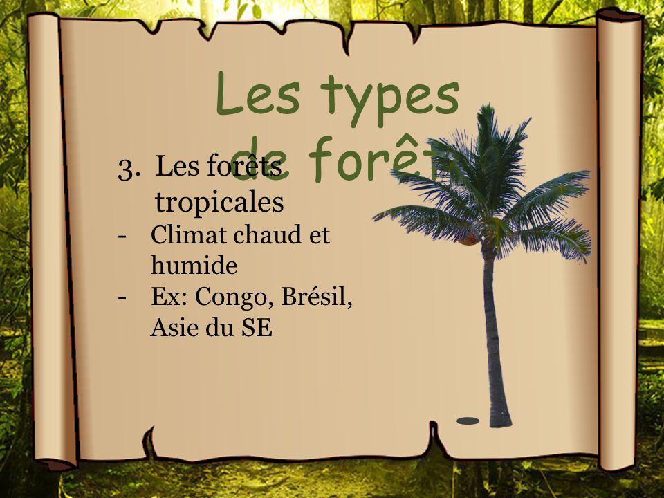 Les types de forêt Les forêts tropicales Climat chaud et humide
