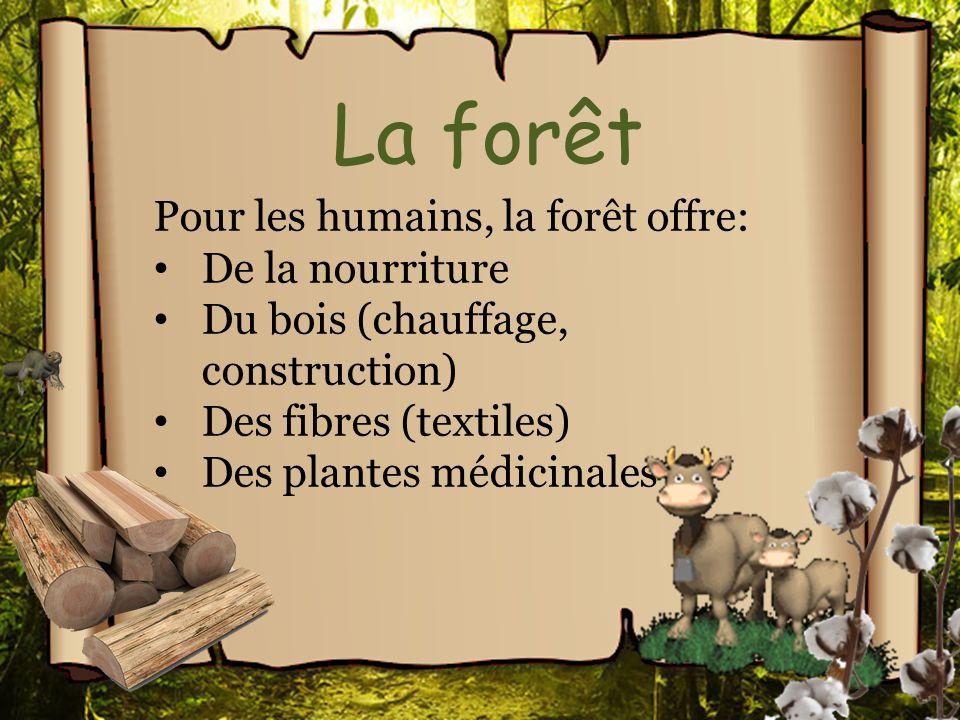 La forêt Pour les humains, la forêt offre: De la nourriture