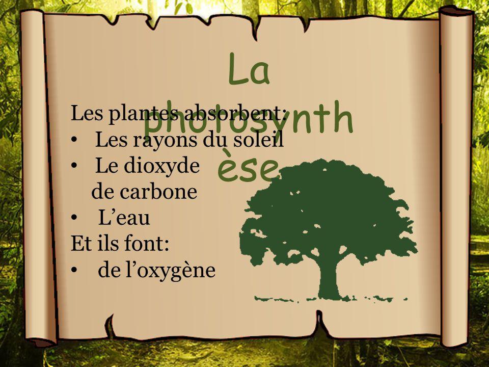 La photosynthèse Les plantes absorbent: Les rayons du soleil