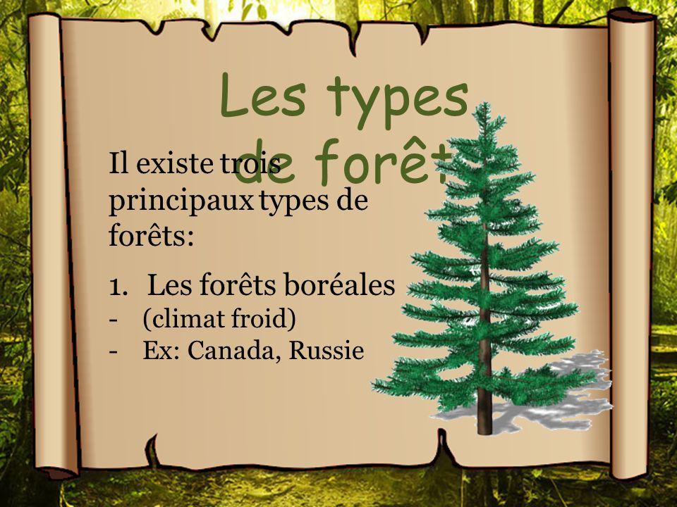 Les types de forêt Il existe trois principaux types de forêts: