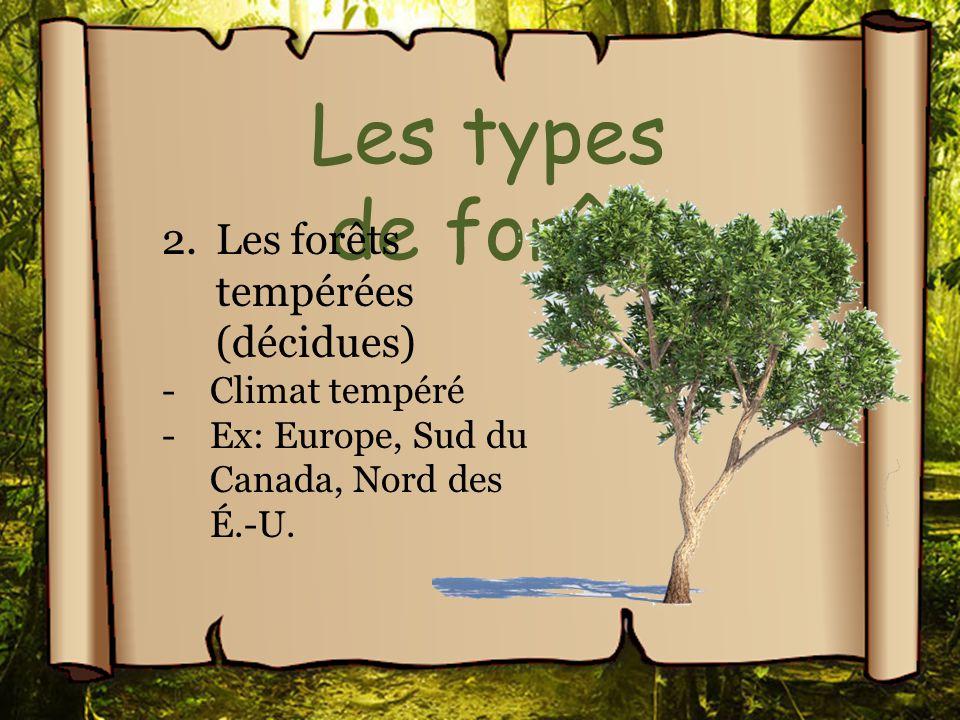 Les types de forêt Les forêts tempérées (décidues) Climat tempéré
